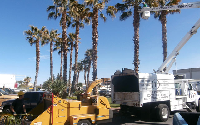 Southern Nevada Tree Trimming & Removal Services